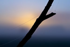 fog-1494432_1920