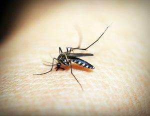 mosquito-1548947